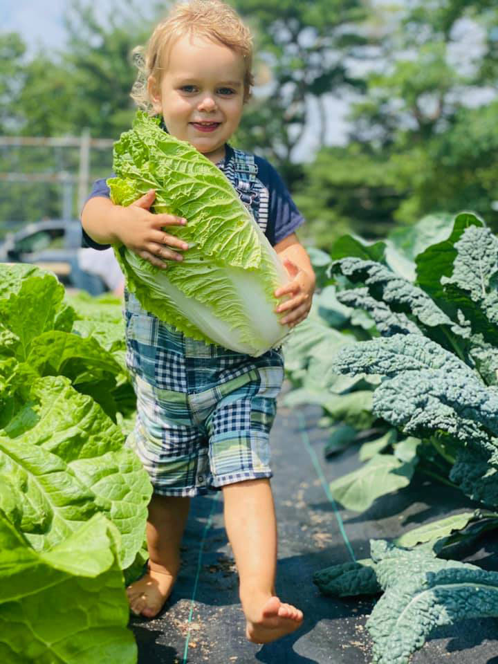 Toddler holding a large cabbage, surrounded by other vegetables