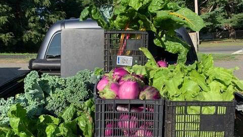 Fresh vegetables in crates